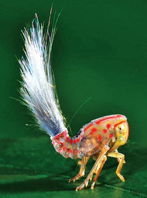 Tại rừng nhiệt đới Nam Mỹ phát hiện côn trùng kỳ quái