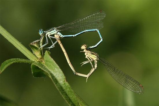Bí ẩn hành vi đồng tính ở côn trùng