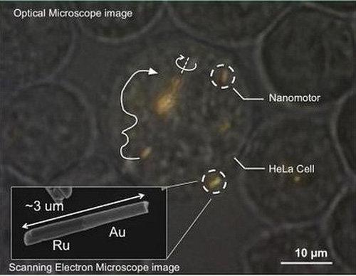 Trang bị động cơ cho tế bào người